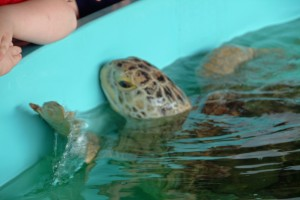 Sea Turtle Inc. in South Padre