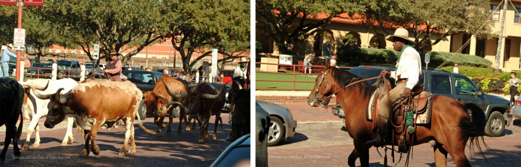 fort worth cowboy, cattle drive, black cowboy, longhorn cattle