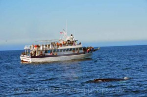 Whale Spotting with Boston Harbor Cruises