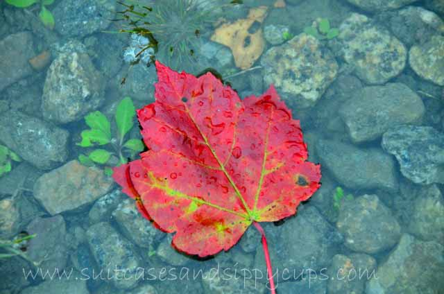 Fresh and Unique Ways to Photograph Fall Leaves