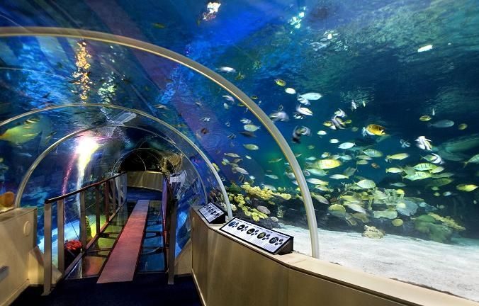 Pin Sea Life Centres on Pinterest