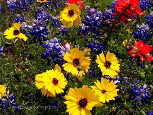 Wildflowers of texas suitcases and sippy cups this mightylinksfo