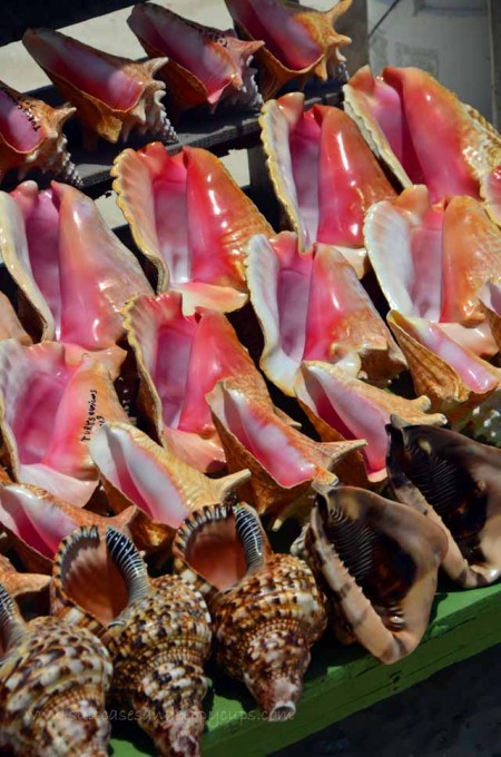 variety of conch shell