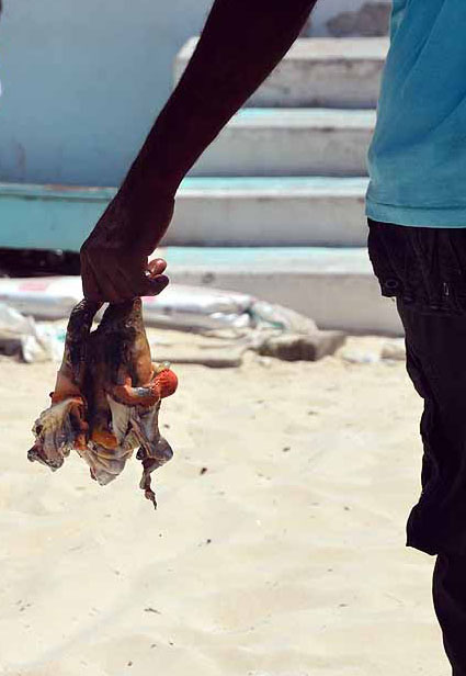 fresh caught conch