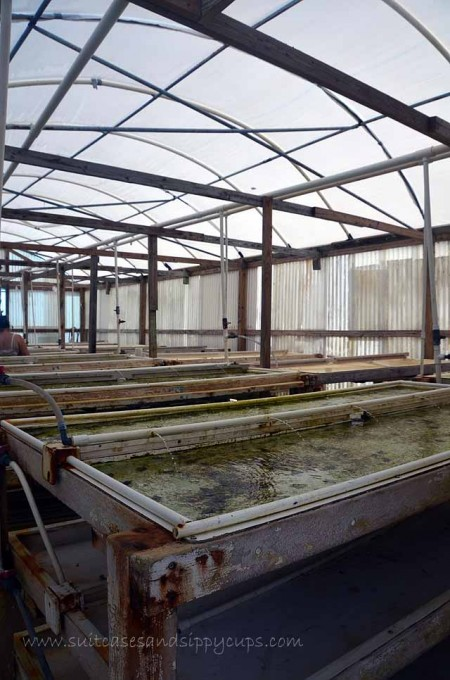 conch farm greenhouse