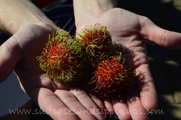 What is that Thing? Lichas or Rambutan?